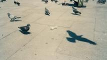 m linnut 11