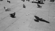 m linnut 6